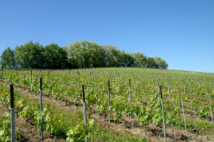 domaine-cotrable-3