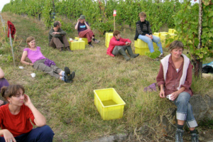 vendanges-cotrable-6